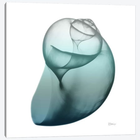 Water Snail III Canvas Print #ALK78} by Albert Koetsier Art Print