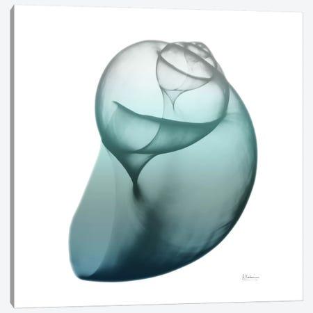 Water Snail III 3-Piece Canvas #ALK78} by Albert Koetsier Art Print