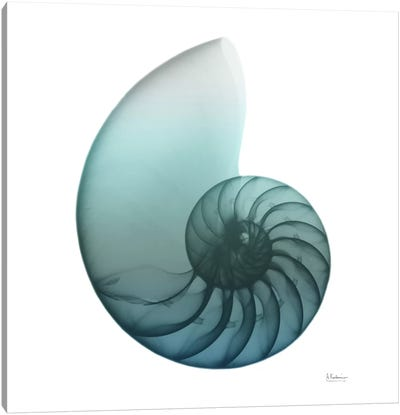Water Snail IV Canvas Art Print