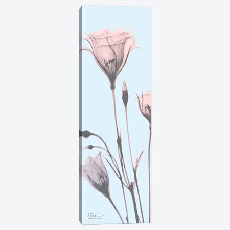 Gentian Paradise Canvas Print #ALK7} by Albert Koetsier Canvas Art