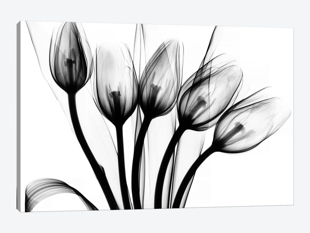 Marching Tulips by Albert Koetsier 1-piece Canvas Print
