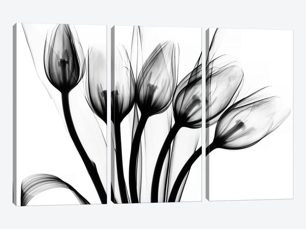 Marching Tulips by Albert Koetsier 3-piece Art Print