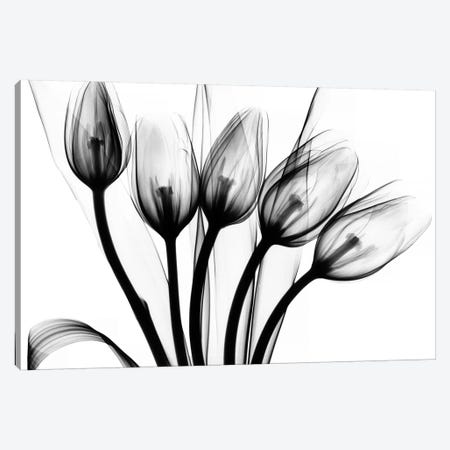Marching Tulips Canvas Print #ALK90} by Albert Koetsier Canvas Art Print
