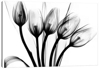 Marching Tulips Canvas Art Print