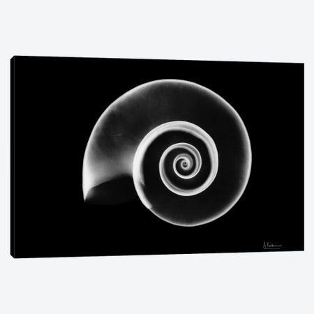 Ramshorn Snail Shell Canvas Print #ALK93} by Albert Koetsier Art Print
