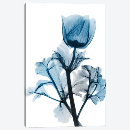 Sapphire Gleam I Canvas Print #ALK95} by Albert Koetsier Canvas Wall Art