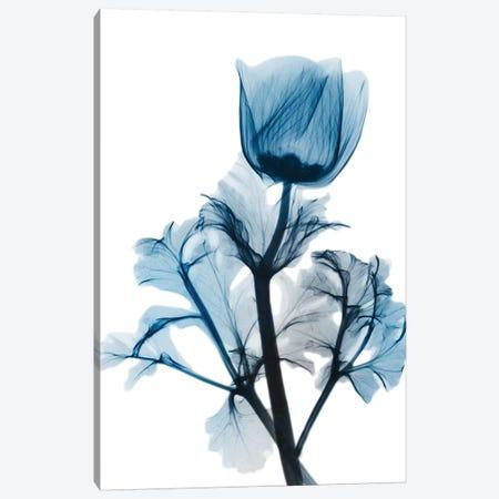 Sapphire Gleam I Canvas Print #ALK95} by Albert Koetsier Canvas Wall Art