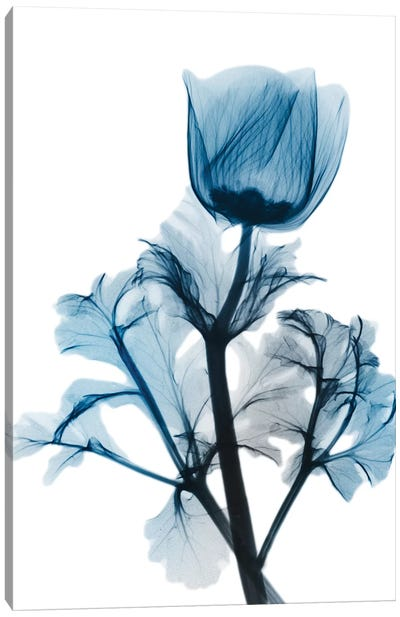 Sapphire Gleam I Canvas Art Print