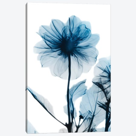 Sapphire Gleam II Canvas Print #ALK96} by Albert Koetsier Canvas Artwork