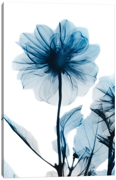 Sapphire Gleam II Canvas Art Print