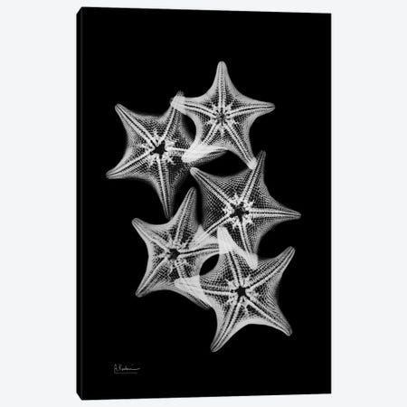 Starfish Collage Canvas Print #ALK99} by Albert Koetsier Canvas Art Print