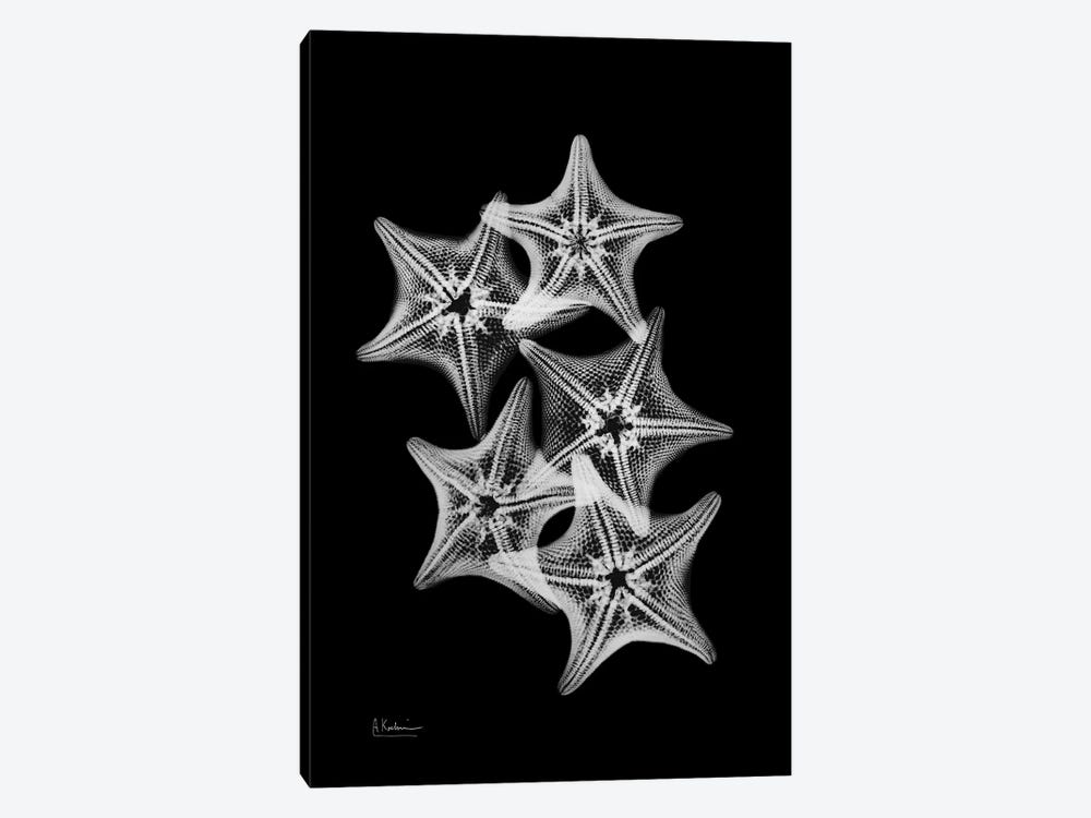 Starfish Collage 1-piece Canvas Wall Art