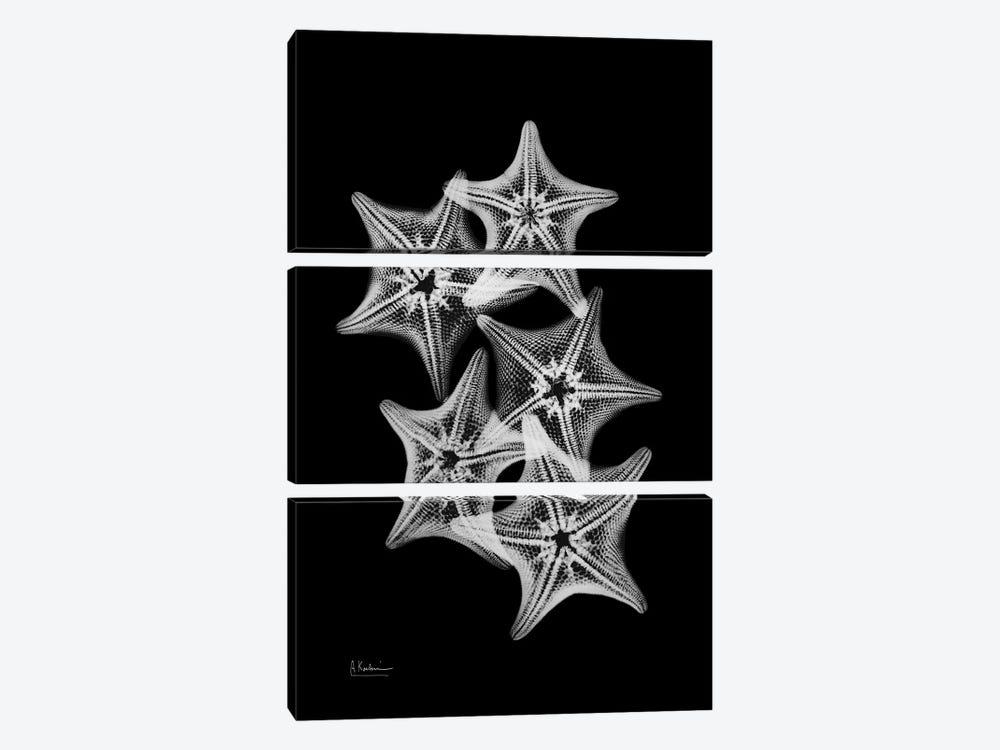 Starfish Collage by Albert Koetsier 3-piece Canvas Art
