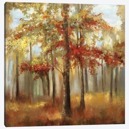 Soft Light I Canvas Print #ALP182} by Allison Pearce Canvas Print