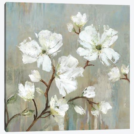 Sweetbay Magnolia I Canvas Print #ALP206} by Allison Pearce Canvas Print