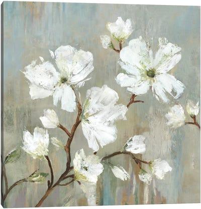 Sweetbay Magnolia I Canvas Art Print