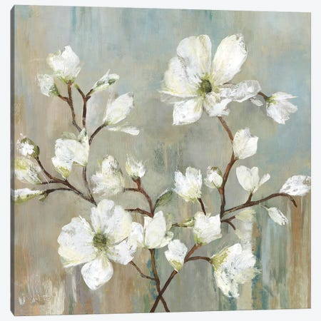 Sweetbay Magnolia II Canvas Print #ALP207} by Allison Pearce Canvas Art Print