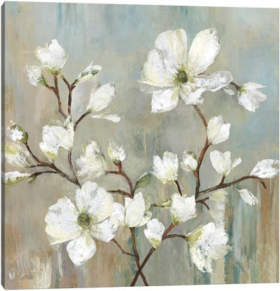 Sweetbay Magnolia II Canvas Art Print