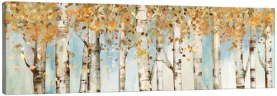 Birch Country Canvas Art Print