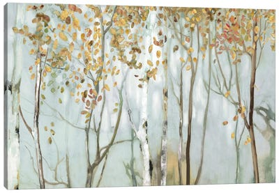 Birch In The Fog II Canvas Art Print