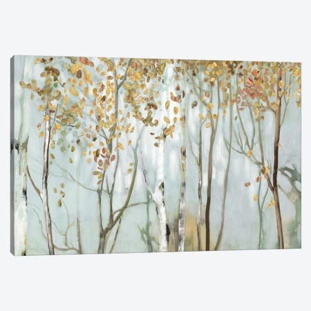 Birch In The Fog II Canvas Print #ALP232} by Allison Pearce Art Print