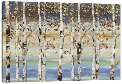 Dark Birch III  Canvas Art Print