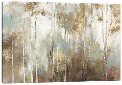 Fine Birch III Canvas Art Print