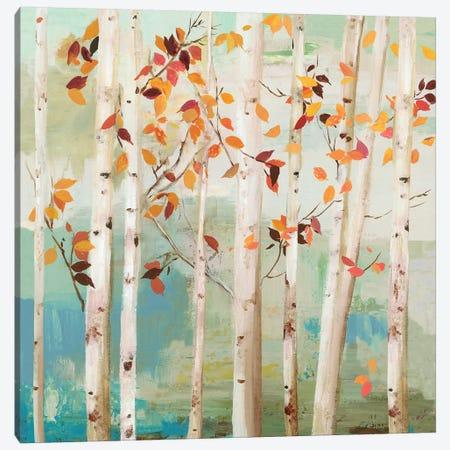 Fall Birch Trees  Canvas Print #ALP316} by Allison Pearce Canvas Print