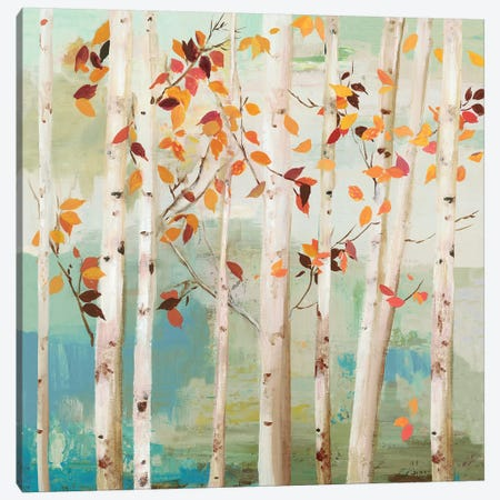 Fall Birch Trees  Canvas Print #ALP316} by Allison Pearce Canvas Print