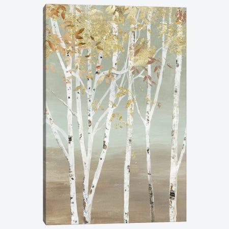 Golden Birch Canvas Print #ALP410} by Allison Pearce Art Print