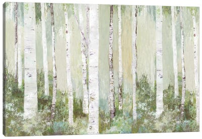 Tranquil Forest Canvas Art Print
