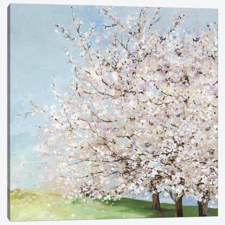 Blossom Orchard Canvas Print #ALP430} by Allison Pearce Art Print