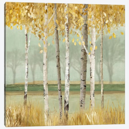 Golden Birch Canvas Print #ALP92} by Allison Pearce Canvas Artwork