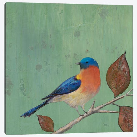 Resting Bird II Canvas Print #ALT2} by Mehmet Altug Art Print