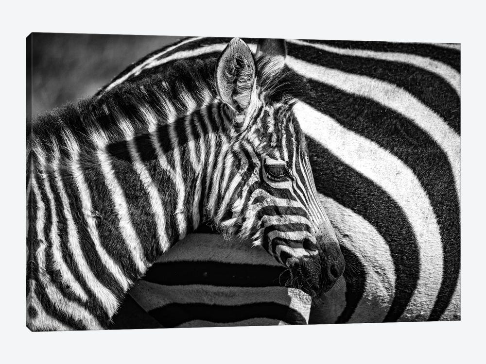 Maasai Mara National Reserve, Narok County, Kenya I by Alex Buisse 1-piece Art Print