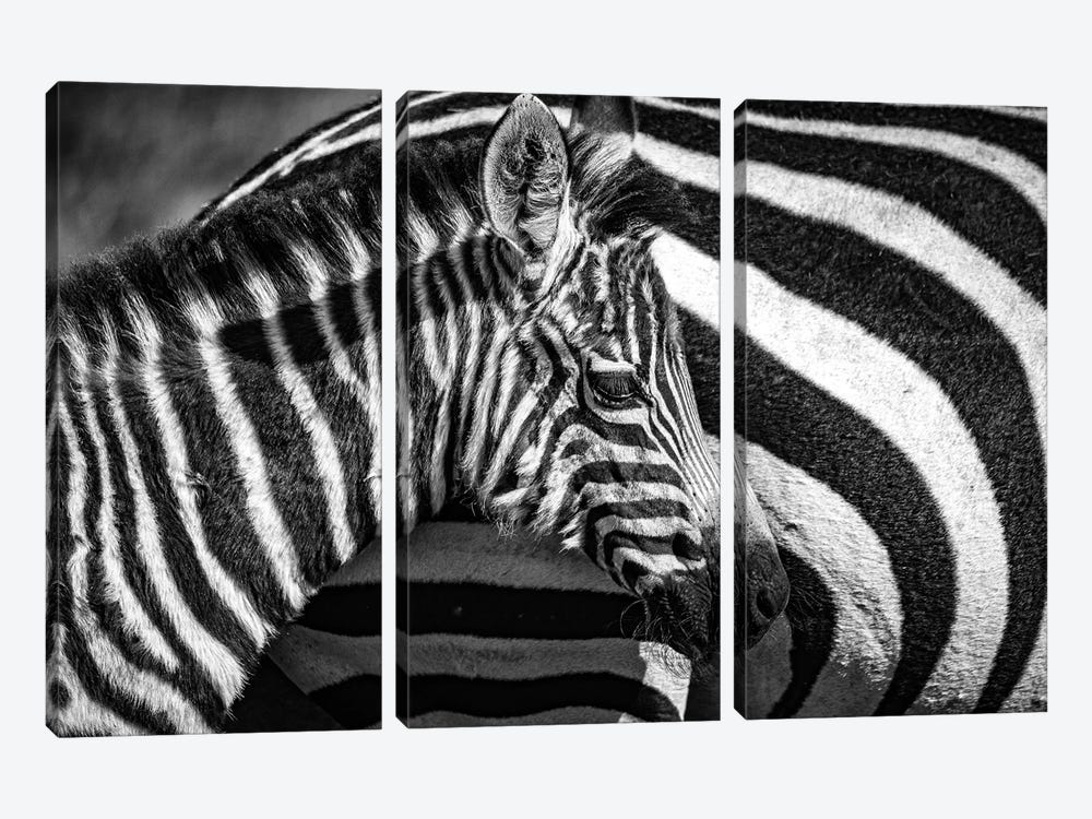 Maasai Mara National Reserve, Narok County, Kenya I by Alex Buisse 3-piece Canvas Print