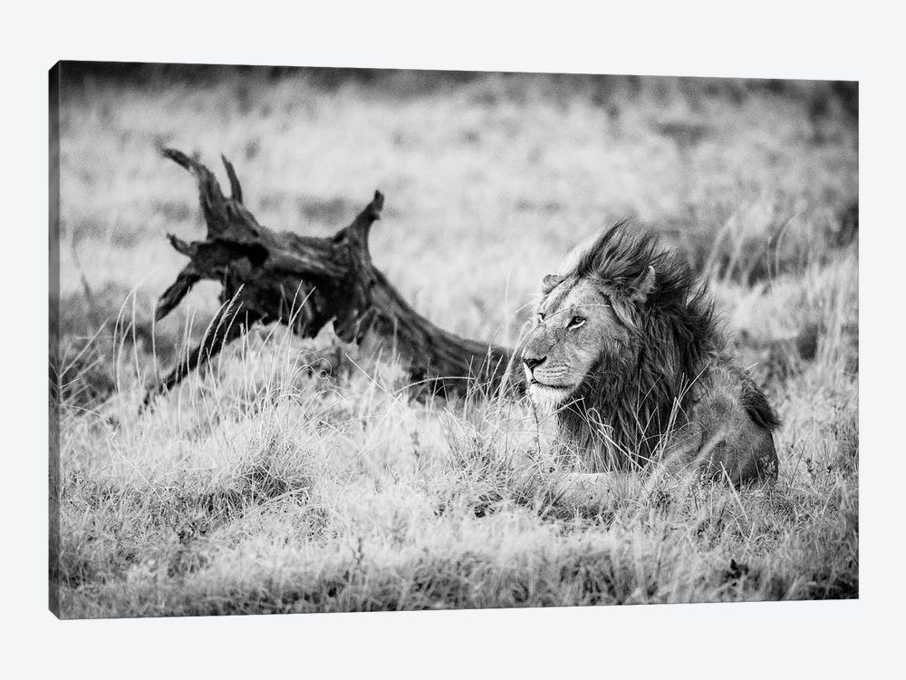 Maasai Mara National Reserve, Narok County, Kenya II by Alex Buisse 1-piece Canvas Artwork