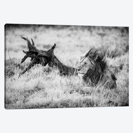 Maasai Mara National Reserve, Narok County, Kenya II 3-Piece Canvas #ALX58} by Alex Buisse Canvas Wall Art
