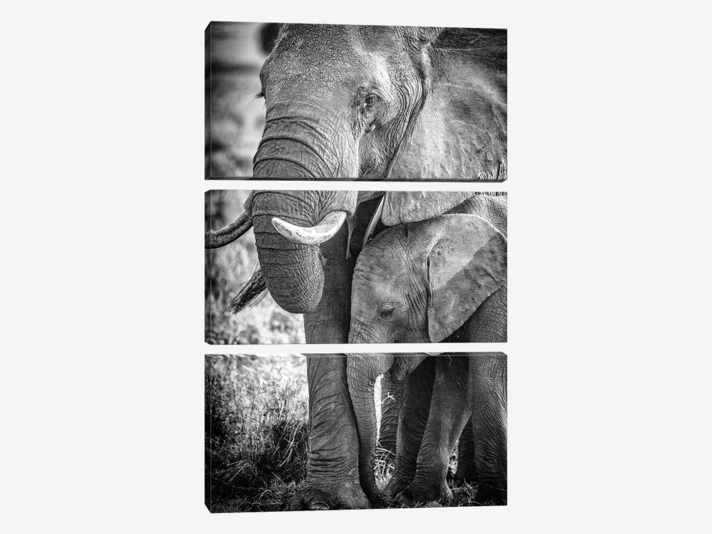 Maasai Mara National Reserve, Narok County, Kenya III by Alex Buisse 3-piece Canvas Art Print