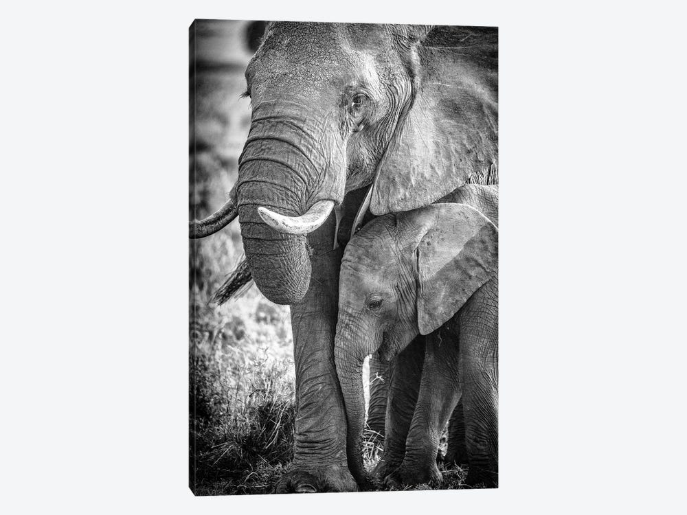 Maasai Mara National Reserve, Narok County, Kenya III by Alex Buisse 1-piece Canvas Print