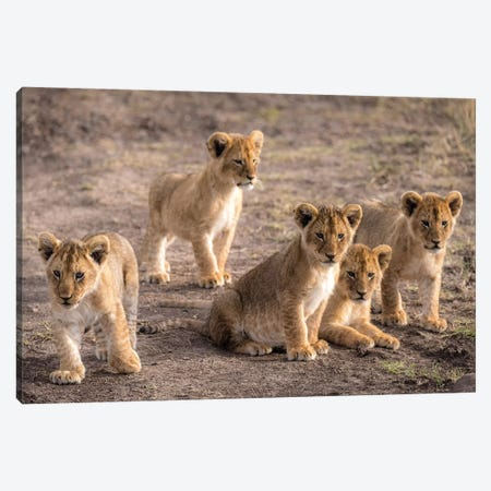 Maasai Mara National Reserve, Narok County, Kenya IV Canvas Print #ALX60} by Alex Buisse Art Print