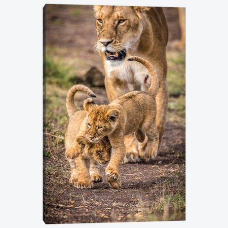Maasai Mara National Reserve, Narok County, Kenya V Canvas Print #ALX61} by Alex Buisse Canvas Print