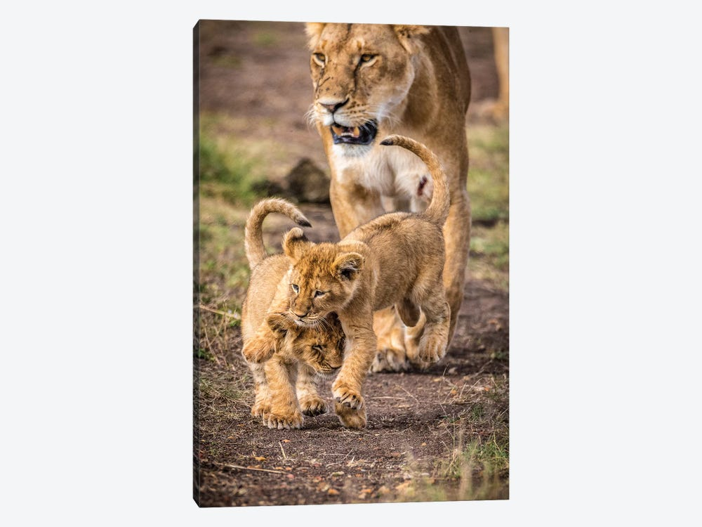 Maasai Mara National Reserve, Narok County, Kenya V by Alex Buisse 1-piece Canvas Art