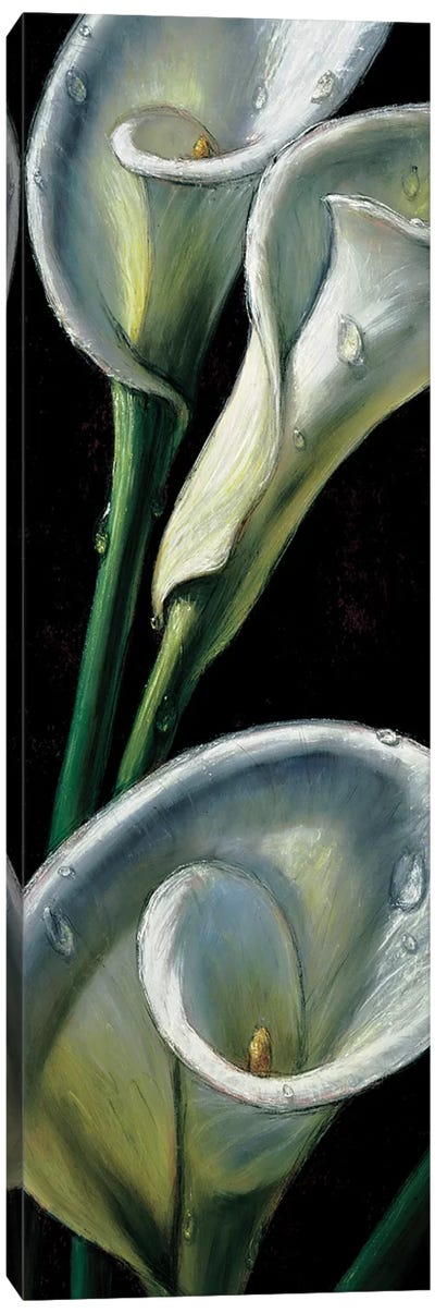 Dewdrop Callas Canvas Art Print