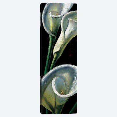Dewdrop Callas Canvas Print #AMC13} by AlmaCh Canvas Art