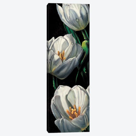 Dewdrop Tulips Canvas Print #AMC14} by AlmaCh Art Print
