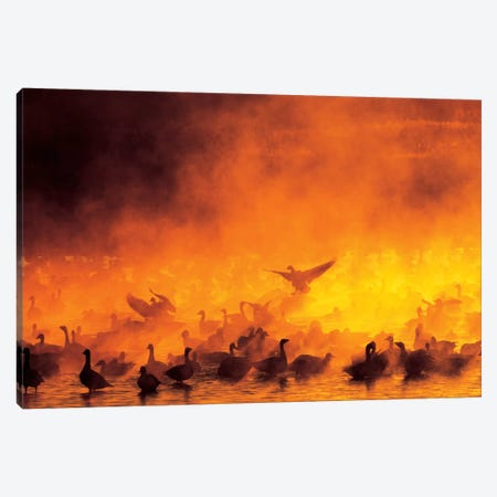 Snow Geese Flock Surrounded By Fog, Bosque del Apache National Wildlife Refuge, Socorro County, New Mexico, USA 3-Piece Canvas #AMO3} by Arthur Morris Canvas Wall Art
