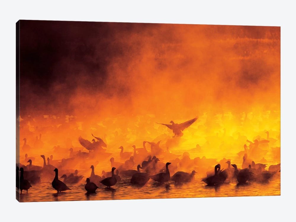 Snow Geese Flock Surrounded By Fog, Bosque del Apache National Wildlife Refuge, Socorro County, New Mexico, USA by Arthur Morris 1-piece Canvas Art