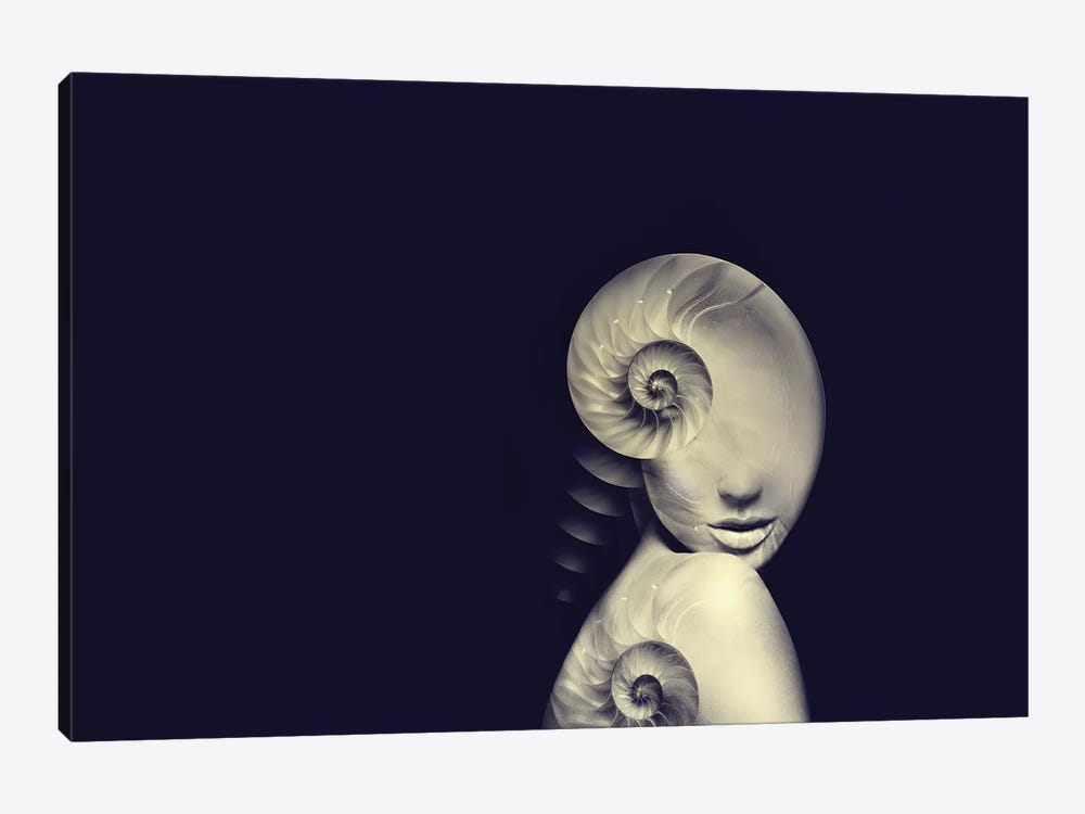 Shell I by Tatiana Amrein 1-piece Canvas Art