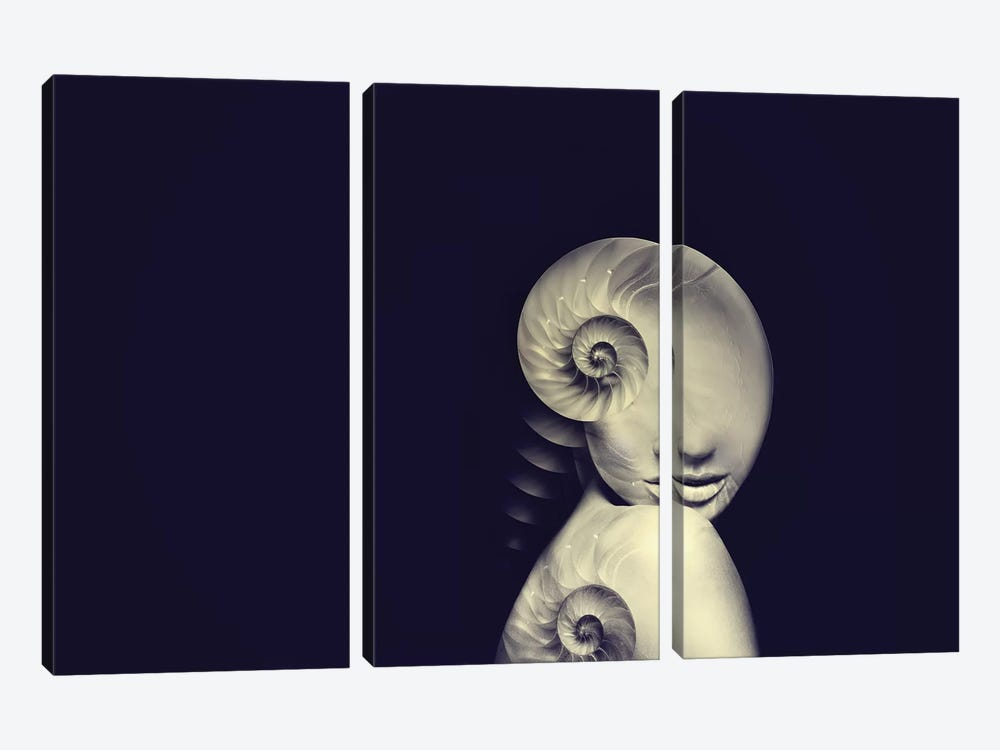 Shell I by Tatiana Amrein 3-piece Canvas Wall Art